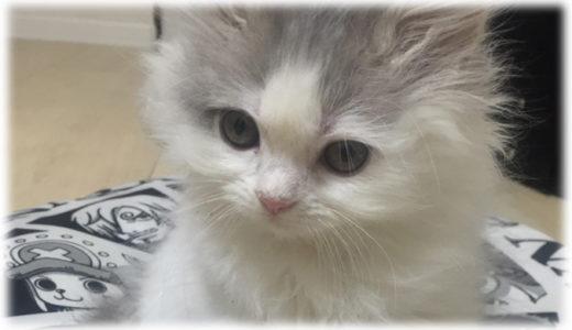 猫飼いが猫に興味を持ち始めたキッカケ