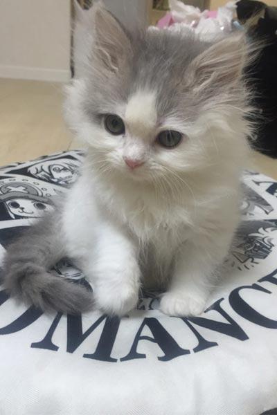 猫飼いが猫に興味を持ち始めたキッカケは? 迎え入れるまでの苦悩は?