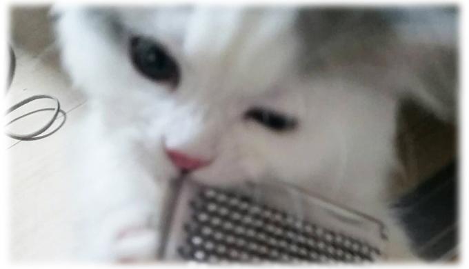 猫のブラッシングは大切なケアのひとつ!その理由は? 猫飼いが編み出したブラッシング嫌いの猫への対応策