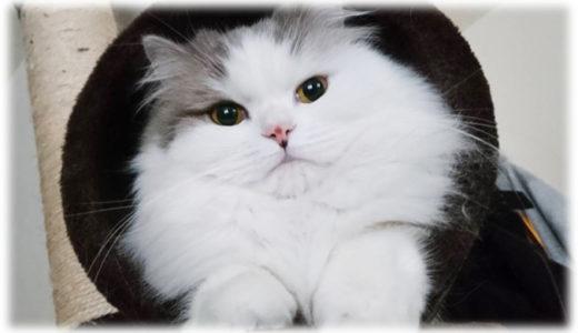 猫と暮らし始めて飼い主に起こった変化
