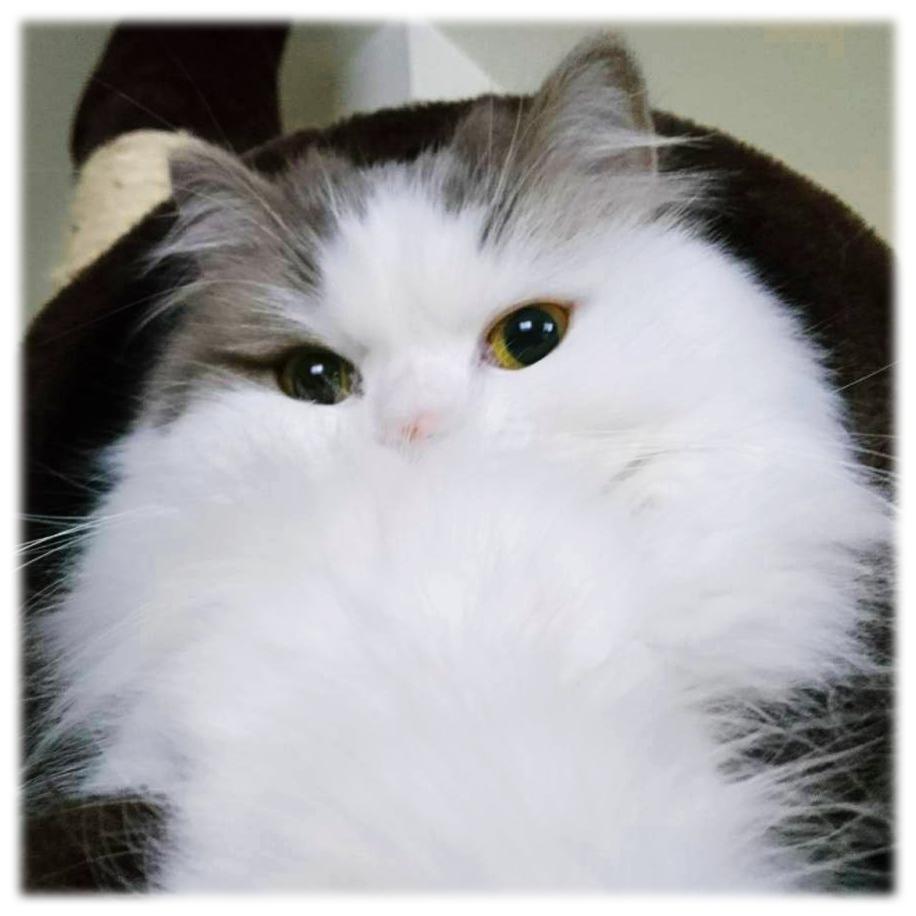 猫と暮らして変化した飼い主