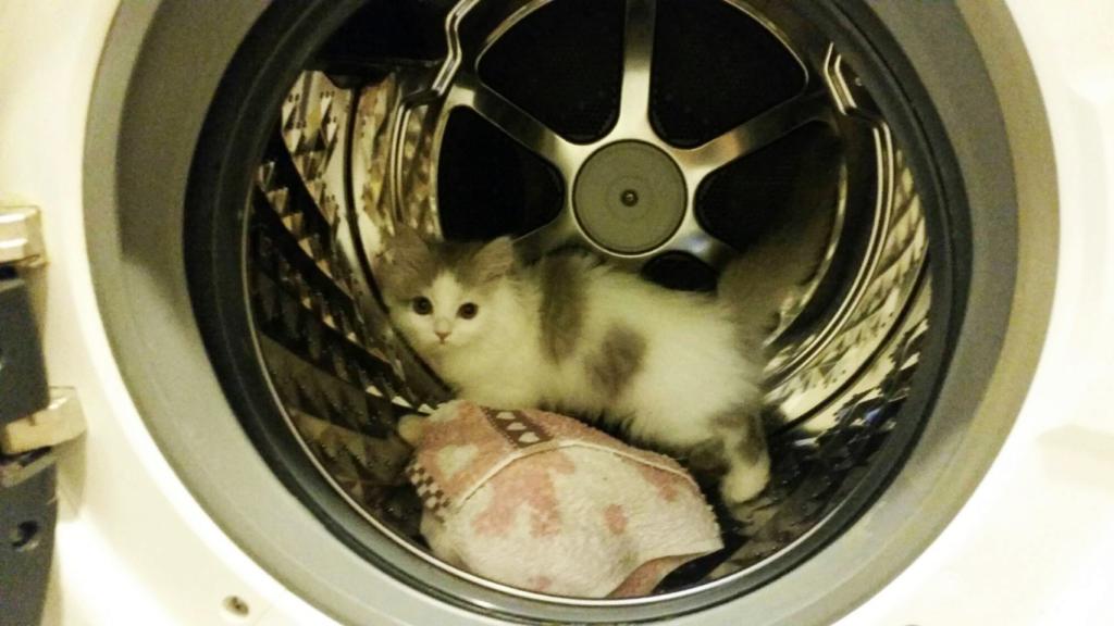 """これぞ猫あるあるのひとつ!""""どこでも入り込む猫の姿""""とはこういうことだ!"""