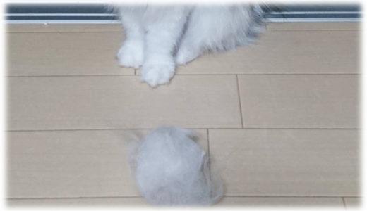 長毛猫の換毛期は要注意!