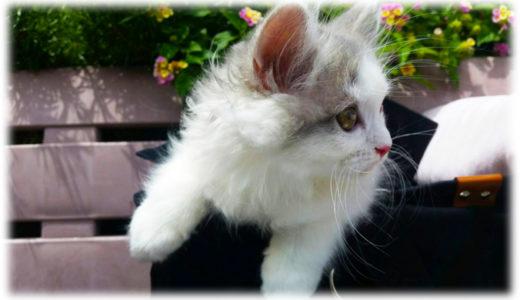 猫の些細な体調不良のサインを見過ごさないで!