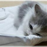 <猫の神隠し事件>子猫が突然消える!? 猫飼いが一瞬で大パニックになった本当にあった話