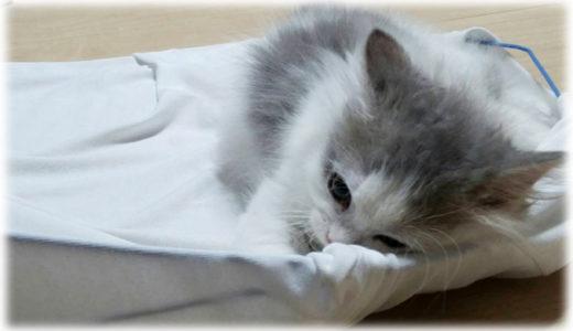 我が家初日で起きた猫の神隠し事件