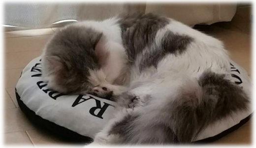 猫のペット保険の加入は必要?