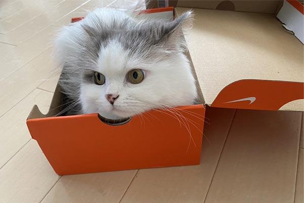 ダンボールやコンビニ袋etc. 猫は気になるものにはとことん入る生き物だった!