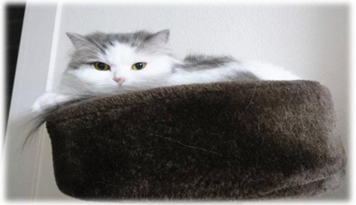 買って大正解な猫アイテム『キャットタワー』
