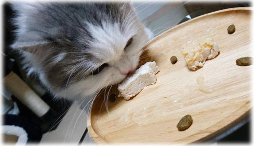 お祝いにぜひ!猫向け簡単手作りプレートのご紹介
