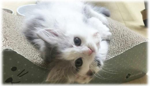 猫の成長の早さを我が家の猫で振り返る