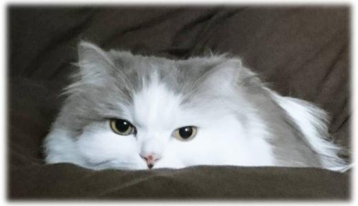 猫と暮らしてちょっとだけ困ったこと3選