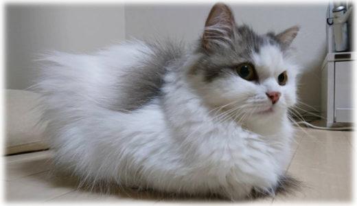 世界猫の日。SNSの公式アカウントたちの面白い呟き