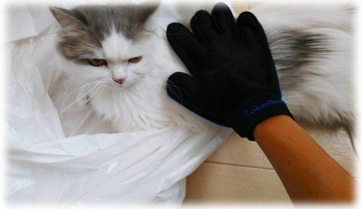 撫でながらブラッシング。猫のブラッシング手袋が面白い!