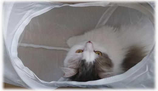 猫のベッドやトンネルもあるよ。IKEAのペットグッズが優秀だよ