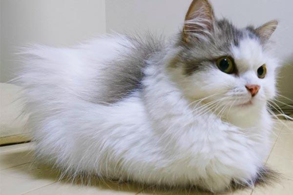 8月8日は世界猫の日! Twitterの公式企業アカウントたちの面白い呟きがセンス溢れる