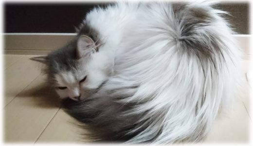 『ニャルソック』や『ニャンモナイト』。猫にまつわる猫用語