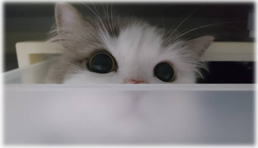 笑ったわ。自由気ままな猫のおもしろ画像