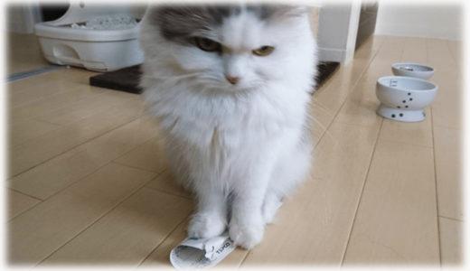 エアコンフル稼働。猛暑な夏の猫飼いの電気代とは?