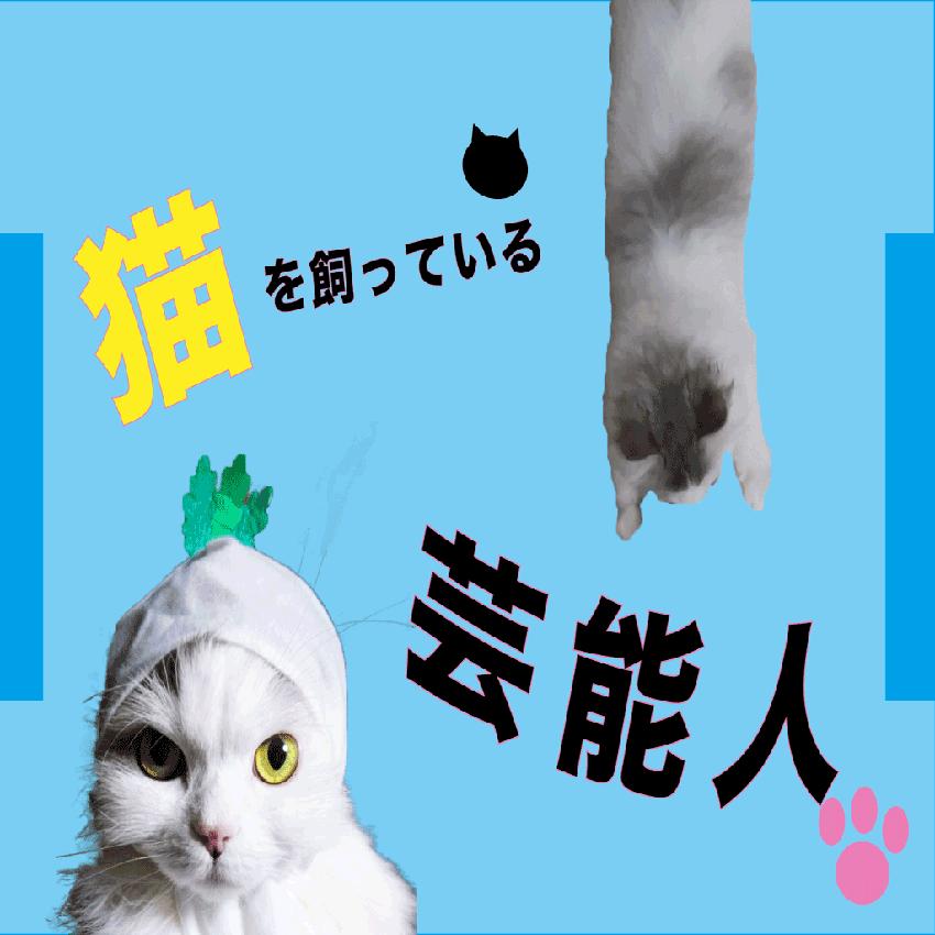 猫飼い芸能人