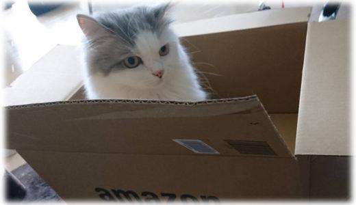 猫のおもちゃを0円で作る!家にあるもので簡単手作りができる!