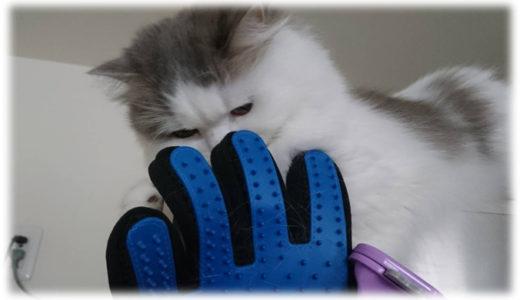 換毛期に備えた猫のブラッシングアイテムとブラッシング方法