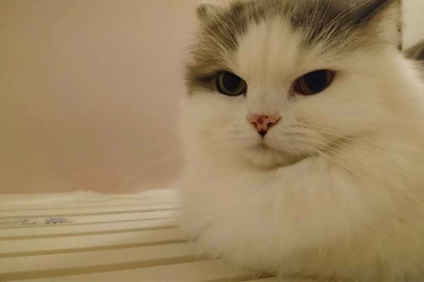 これぞ猫あるある!? 冬にみられる猫のおもしろ行動[暖房LOVE・お風呂に突撃など……]