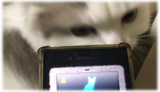 インストールしてね!猫飼いにオススメのアプリ