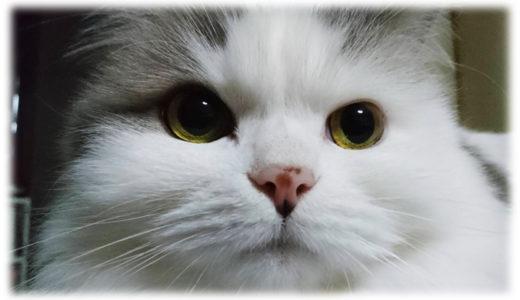 泣ける。映画『旅猫リポート』のあらすじ・感想