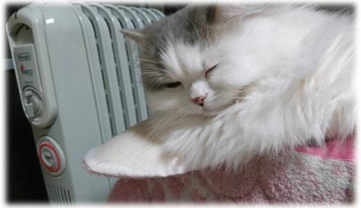 猫あるある。冬にみられる猫の不思議な光景