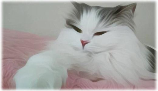 猫の写真をアレンジするアプリ『PicsArt』が面白い!
