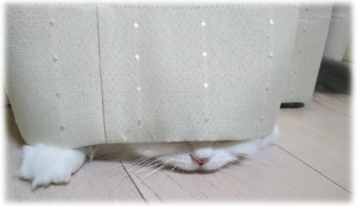 猫飼いが経験したメルカリで売れた猫アイテム