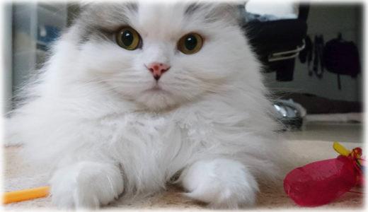 猫をトリコにするおもちゃ。『カシャカシャぶんぶん』の魅力に迫る