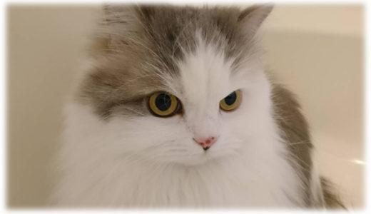 人も猫も同じかも?猫と暮らして学んだ関係性のあり方