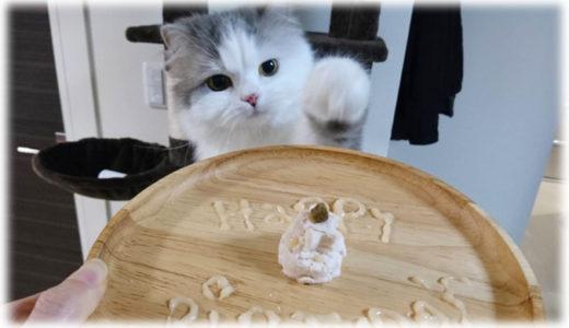 愛猫へのご馳走に!ささみとちゅーるで作るペット向けお祝いプレート