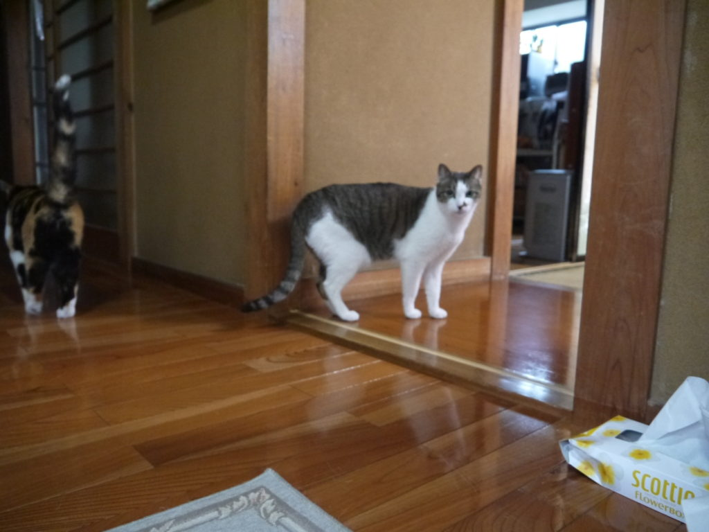 写真集『てらねこ』で話題。猫に会えるお寺「那須の長楽寺」に行ってみた!