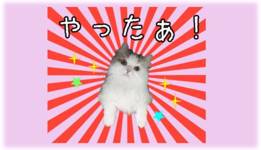 愛猫がLINEスタンプになる!誰もが作れるLINEスタンプの作成方法と注意点とは?