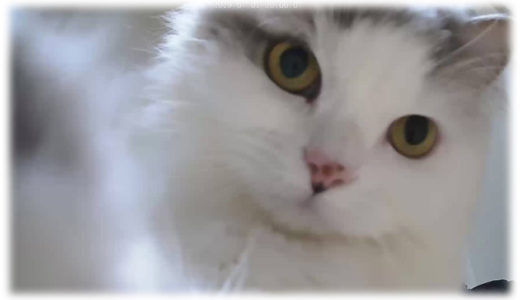 留守中の猫が気になる。ペットカメラで行動が丸わかり!?