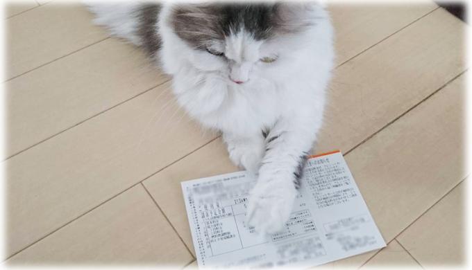 猫と暮らす猫飼いの2019年8月の夏の電気代を公開! 24時間エアコンフル稼働の結果は……