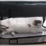 猫の防災対策のおすすめは?非常事態に備えた便利グッズを一挙に紹介!