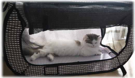 猫の防災対策のおすすめは?非常事態に備えた便利アイテムを一挙に紹介!