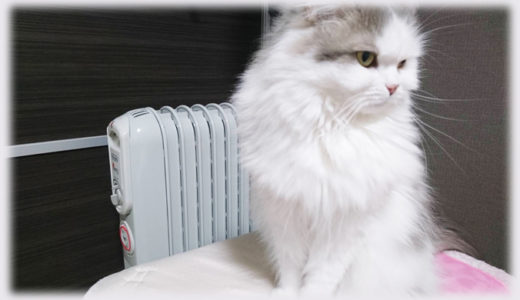 猫飼いを悩ませる猫の防寒対策って結局何がいいの?