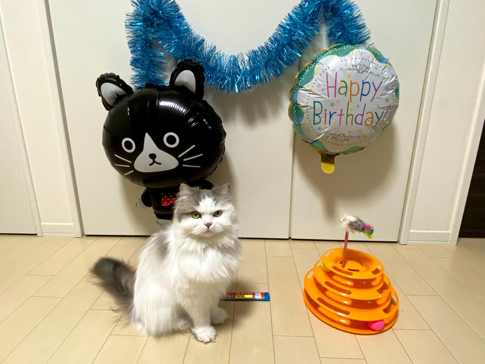 【猫のお誕生日】手作りお祝いプレートの作り方 材料はささみとウェットフードでOK
