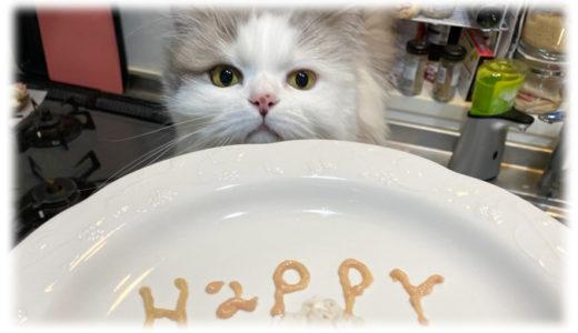 猫のお祝いプレートを手作りで!ささみとウェットフードで作る愛情いっぱいご飯