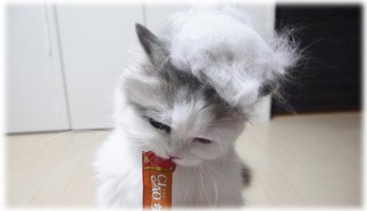 猫の毛が洋服にびっしり。猫飼いが辿り着いた対処法