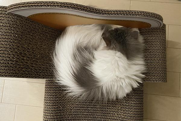 猫の爪とぎ「カリカリーナ」が値段以上の価値! 猫飼いを感動させた魅力に迫る!