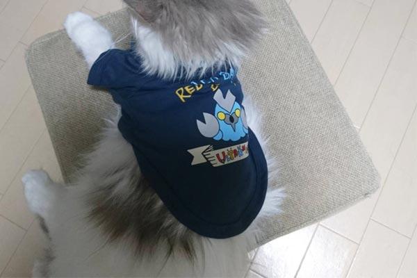 3COINSのペットグッズがコスパ以上の価値! 猫飼いが実際購入したものを公開