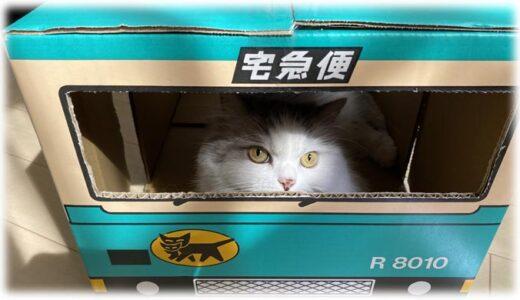 猫飼いはクロネコヤマトの「ウォークスルーボックス」をチェックすべし! 猫ファーストを考えた工夫も公開